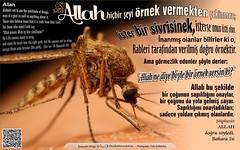 Kerim Kuran 2-26 (Oku Rabbinin Adiyla) Tags: god quote muslim religion creation bible genesis allah verse kuran ayet ayetler