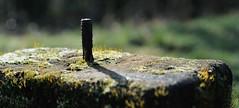 Rusty screw (Olaf Donnerski) Tags: sun field nikon bokeh rusty manual depth d300 focusing 2351 beyondbokeh