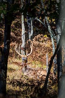 Michigan Whitetail Hunt 18