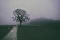 """Landscape"" (helmet13) Tags: mist tree fog forest landscape garbage walkway waste raisedstand 100faves peaceaward heartaward world100f d800e"