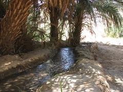 IMG_4273 (motazabdelazeem   ) Tags: sudan rivernile     northernsudan    alkarafab