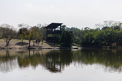 BM7Q4281.jpg (Idiot frog) Tags: park lake building tree water leaf outdoor bade lakeside taoyuan ecosystem