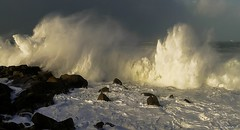 Waves crashing on the coast (Herb) Tags: storm rock coast shoreline wave cte vague rocher hightide tempte littoral crashingwave marehaute grandemare