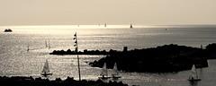 Port esportiu del Frum - Barcelona - Catalunya (Isabel Aguado Rodrguez) Tags: barcelona mar spain europe catalunya vela frum panormicas elmaresme marmediterraneo barcosdevela sonydschx300 puertodelfrum