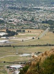 (felix.h) Tags: city newzealand christchurch summer urban animal canon eos sheep hill canterbury 400d canoneos400d digitalrebelxti eoskissdigitalx tokina5013528 tokina50135mm28