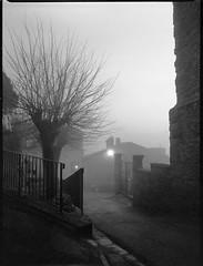 avenue, dusk, fog, streetlight, Cortona, Tuscany, Italy, Mamiya 645 Pro, Ilford HP5+, Moersch Eco Film Developer, late December 2015 (steve aimone) Tags: street blackandwhite italy tree 120 film monochrome fog architecture mediumformat streetlight streetscene ilfordhp5 tuscany cortona mamiya645pro moerschecofilmdeveloper epsonperfectionv550