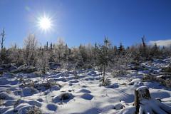 Lothar Path (winkler.roger) Tags: trees winter forest germany landscape blackforest freudenstadt kniebis lotharpath