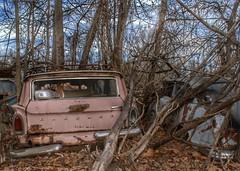 DSC08541.ARW-01 (juice95m3) Tags: abandoned rust vintagecar automobile junkyard oldcars classiccars