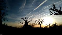Ciel d'un soir (Mystycat =^..^=) Tags: sunset sky nature silhouette ciel smartphone nuages paysage arbre coucherdesoleil alcatelidol3