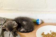 Rescuing tiny kitties (iamrichlol) Tags: cats cute slr art love water animals cat 50mm nikon feline 14 sigma australia kittens perth kitties wa 24mm 5100 dslr d5100