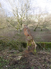 Penistone - Dunford Bridge old railway  - Owl at Bullhouse (dave_attrill) Tags: bridge house building tree green 1955 overgrown station manchester concrete wooden carved office support closed sheffield great central platform engine picadilly railway tunnel ticket victoria junction upper trail stump owl don 1970 footpath remains dunford huddersfield woodhead bridleway barnsley gantry transpennine millhouse stopping wortley cycleway allweather electrification penistone electrified hazelhead neepsend oxspring oughtibridge stocksbridge wadsley deepcar bullhouse stationmasters thurgoland oughty