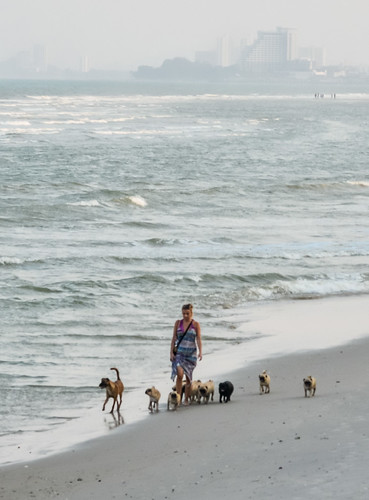 Walking dogs along the beach ?