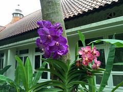 Img507151nx2 (veryamateurish) Tags: singapore shangrilahotel iphone6