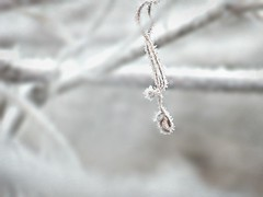 Shock freezed (broombesoom) Tags: winter white macro ice nature germany deutschland frozen frost wine crystal natur freeze minimalism eis allemagne wein schrfentiefe gefroren wildwine wilderwein eiskristalle