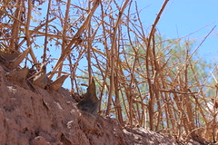 Desert Defence (Alison Claire~) Tags: chile travel travelling nature glass wall america canon de landscape outdoors eos san desert outdoor south pedro adobe atacama walls traveling canoneos defense 600d canoneos600d