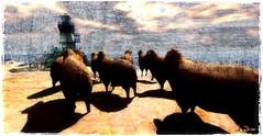 To the Lighthouse - Gita al faro (La Baroque ( Laura )) Tags: sea cloud lighthouse texture sheep secondlife texturing