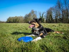 La reine du freesbee, ce sera bientt moi! (K r y s) Tags: nature outdoor posing extrieur patrol alert lisca basenautique
