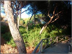 El Portil-Huelva (Spain) (sky_hlv) Tags: españa praia beach andalucía spain europa europe huelva playa resort verano atlanticocean pinares costadelaluz puntaumbría cartaya elportil oceanoatlántico