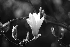 Rotterdam 10-04-2016 SM-5 (Pure Natural Ingredients) Tags: park flowers holland contrast garden spring nikon d70 nederland thenetherlands sigma f18 f28 bloemen euromast zuid 105mm niceweather voorjaar schoonoord d90 50mmoutdoor botanicbotanishetuin