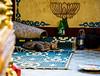 Cats in the temple (JohannesLundberg) Tags: sleeping expedition cat temple burma buddhism myanmar mm housecat mammalia domesticcat katt felis carnivora felidae felissilvestriscatus feliscatus eutheria kayah myanmarburma theria tamkatt ywarthit