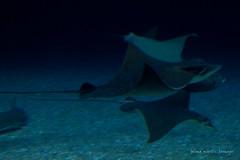 valencia 2016-114 (hiroke636) Tags: valencia mar peces oceano oceanografic