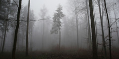 rotbuchenwald im nebel 0588 (s.alt) Tags: rot fog bayern europa nebel silence fagus buche laubbaum rotbuche rotbuchenwald rtlichefrbung