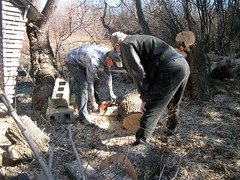 Making Sure.... (geevee41) Tags: outdoors spring working chainsaw prairies treecutting