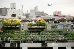 (benson-ho) Tags: flowers plants flower shop tokyo dusk pot    futakotamagawa