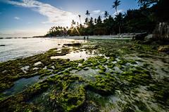 Sunset over the beach (Hendraxu) Tags: travel sunset sea summer sun green beach sad philippines bohol algae seashore traveldestination
