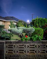 Bright Street Garden (Andrew_Dempster) Tags: longexposure nightphotography night nightscape nightshot suburban au suburbia australia nightlight sa geranium southaustralia frontgarden fruittrees breezeblocks topairy hectorville frontfence