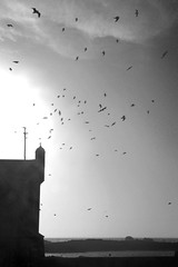 Birds on Essaouira port (nyoz_fr) Tags: travel mountains cat morroco maroc atlas