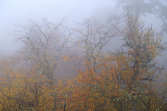 The Diffusion (RKAMARI) Tags: autumn trees colour fall nature fog forest landscape nationalpark cities diffusion bolu yedigller flickrsbest intimatelandscape