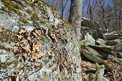 Boulderfield (esywlkr) Tags: nature rock landscape gray northcarolina boulder blueridgeparkway brp boulderfield
