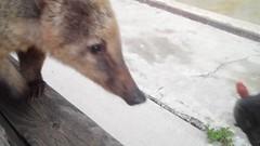 Benidorm video still (Elysia in Wonderland) Tags: holiday zoo lucy video still spain vlog competition natura pete terra won benidorm elysia coati 2016 youtube