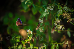 Taiwan-121113-221 (Kelly Cheng) Tags: travel color colour green tourism nature animals horizontal fauna butterfly daylight colorful asia day taiwan vivid nobody nopeople colourful traveldestinations  northeastasia
