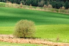 Verts (vidjanma) Tags: couleurs vert paysage arbre nuances