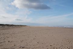 Mablethorpe Northend Beach and Coastline (NTG842) Tags: sea england birds zoo coast wildlife lincolnshire seal sanctuary mablethorpe