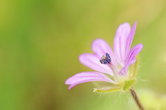 Simplicity (Patrcia. Ferreira) Tags: flower macro green nature canon lite twin 100mm l 6d mt24ex