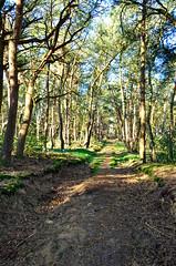 Lommel zustersbos 2 (eddy.vanransbeeck) Tags: natuur bos heide lommel