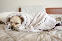 Too much tired (filippo.bassato) Tags: cane riposo tartufo stanco
