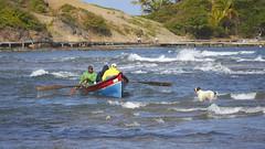 Tombolo (romain_castellani) Tags: sea dog chien mer beach animal canon coast pier boat sand martinique sable cte bateau animaux vagues plage antilles c1 pche carabes tombolo saintemarie efs18135mmf3556