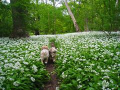 spring1 (C-W Karlstedt) Tags: wood dogs nature skne sweden malm