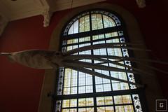 Monaco (Montecarlo), Muse Ocanographique (mrsgcr) Tags: museum aquarium cotedazur montecarlo monaco giantsquid frenchriviera museeoceanographique