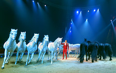 IMG_9405_Y (from_the_sky) Tags: circus zirkus matchpoint matchpointwinner weihnachtszirkus t490 mpt490 mpt502