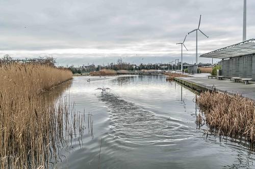 Wind Powered Public Park In Clongriffin Dublin [Father Collins Park]-110959