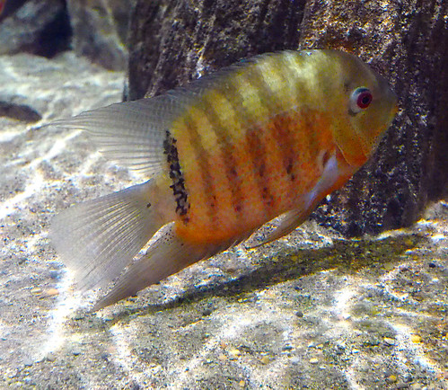 Greater Cleveland Aquarium 01-22-2015 - Unknown Fish 10