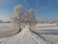 Schwalmstadt_Frost_22_01_2016_52 (Oliver Deisenroth) Tags: schnee trees winter snow ice frozen frost seasonal wintertime eis bäume gefroren