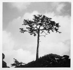 slide176.jpg (DavidRGillespie) Tags: kyuquot actis springisland1950