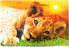 Lion Whelp - Lwenbaby (Leonisha) Tags: lion puzzle lioncub jigsawpuzzle lwe lwenbaby lionwhelp