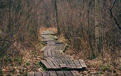 winter's delicate monochrome (dajonas) Tags: winter forest woods december path michigan swamp boardwalk birdingpath